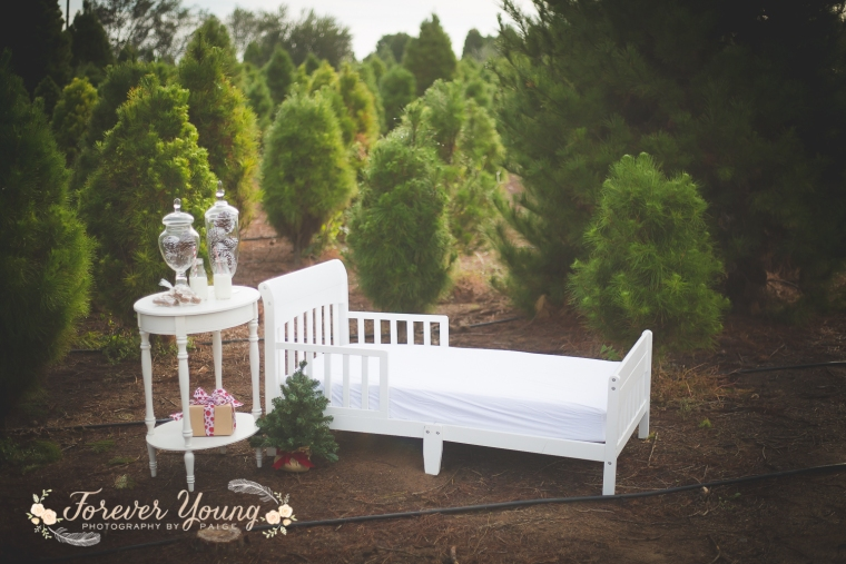 San Diego Christmas Tree Farm Photoshoot | Forever Young Photography By Paige-7