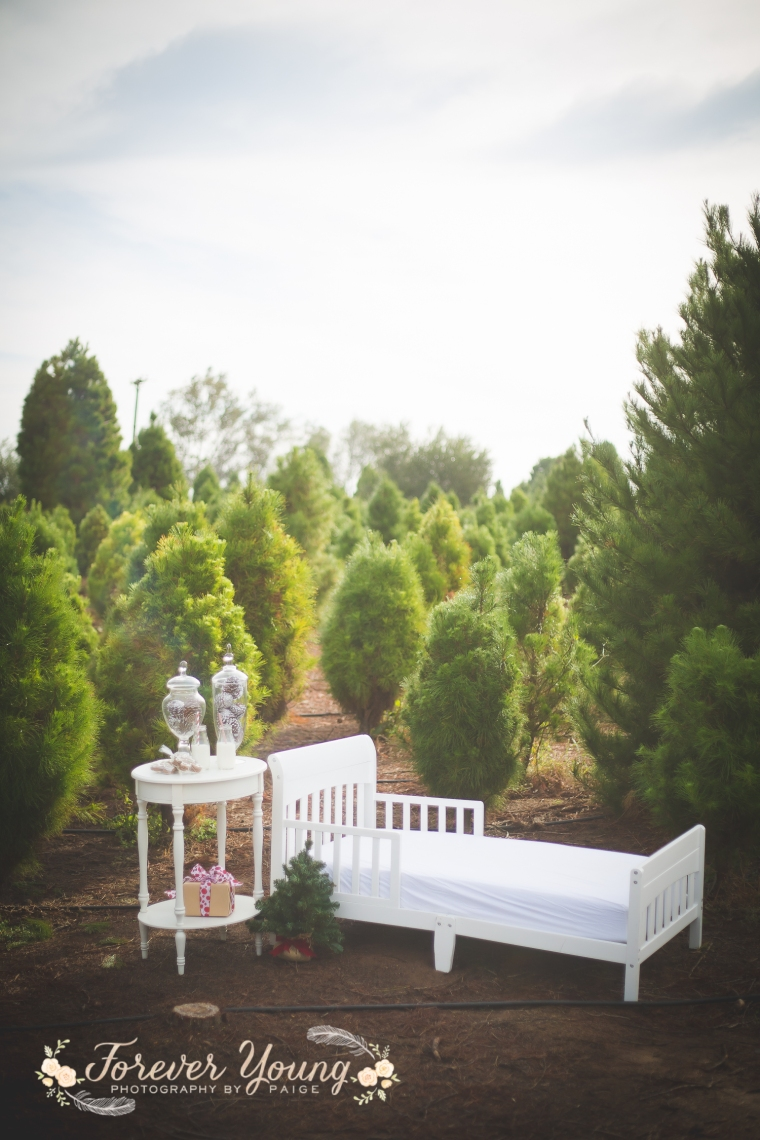 San Diego Christmas Tree Farm Photoshoot | Forever Young Photography By Paige-8