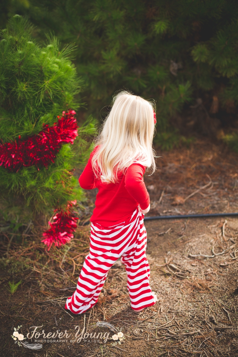 San Diego Christmas Tree Farm Photoshoot | Forever Young Photography By Paige-89