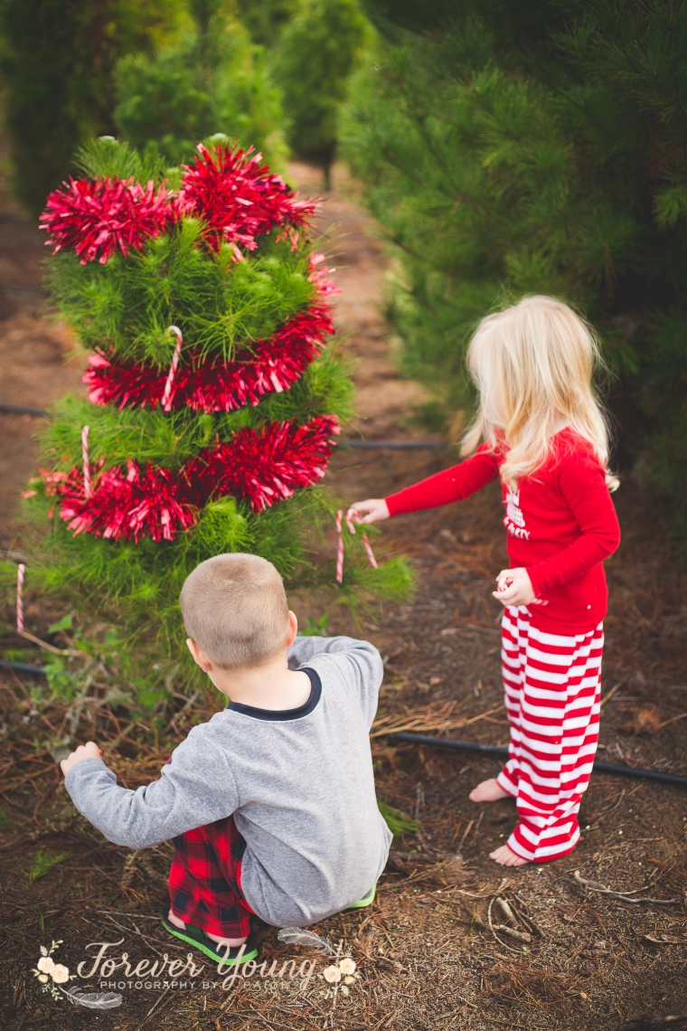 San Diego Christmas Tree Farm Photoshoot | Forever Young Photography By Paige-93