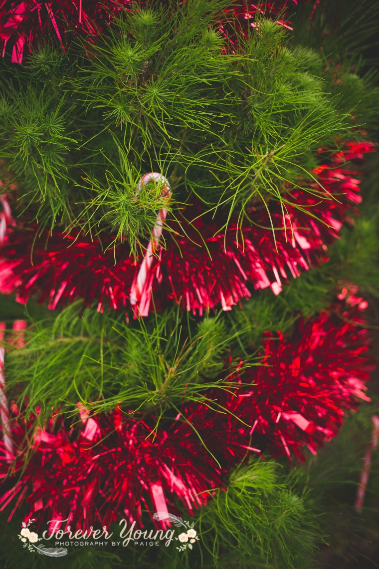 San Diego Christmas Tree Farm Photoshoot | Forever Young Photography By Paige-95