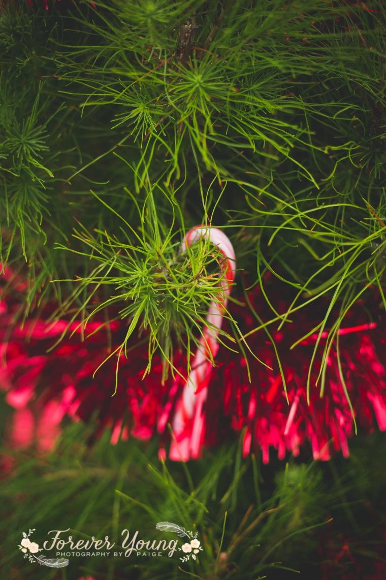 San Diego Christmas Tree Farm Photoshoot | Forever Young Photography By Paige-96